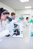 Busy researchers working on experiments in the lab Stock Image