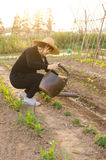 In a busy vegetable watering peasant woman Royalty Free Stock Photography