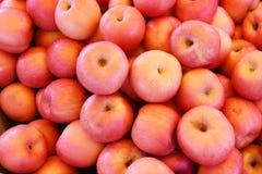 Buszel czerwoni jabłka zdjęcie royalty free
