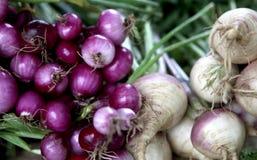 Buszel Organicznie Czerwone cebule rzepy i Obraz Stock