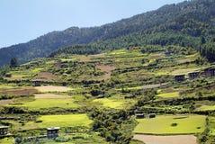 Butão, Haa, agricultura Imagem de Stock