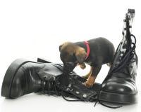 Buta pies policyjny Zdjęcia Royalty Free