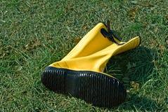 buta trawy kolor żółty Obrazy Royalty Free