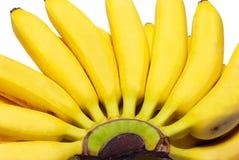 Butch of small bananas. Royalty Free Stock Photos