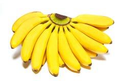 Butch of small bananas. Stock Photo