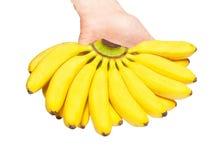 Butch of small bananas Stock Photos