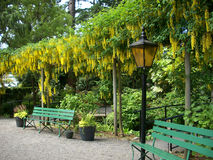 Wooden bench in butchart garden stock photography image - What time does victoria gardens close ...