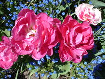 从Butchart庭院的美好的花的布置 库存照片