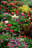 butchart blommar trädgårdar royaltyfria foton