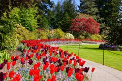 Butchart Gardens, Victoria, Canada, path through vibrant spring tulips. Butchart Gardens, Victoria, Canada. Curving trail through vibrant red and purple spring Stock Image