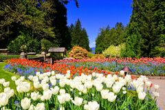 Butchart Gardens, Victoria, Canada, vibrant spring tulips royalty free stock photography