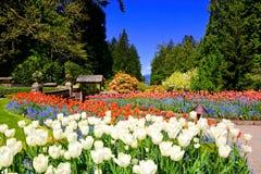 Butchart trädgårdar, Victoria, Kanada, vibrerande vårtulpan royaltyfri fotografi