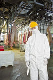Butcher. Wearing hygienic clothing, including a white suit, mouth piece or mask, and hard hat standing on front of the carcasses of slaughtered pigs, carrying stock photo