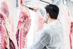 Butcher in butchery or slaughterhouse cutting meat Royalty Free Stock Photo