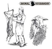 Butcher cut up the carcass of a sheep Royalty Free Stock Images