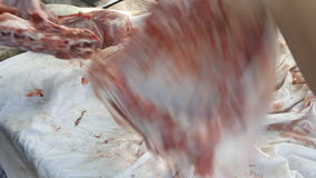 Butcher cutting back part of lamb stock video