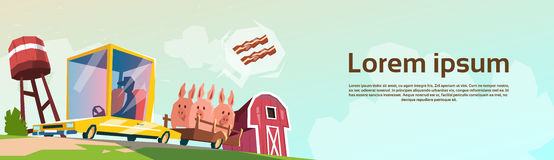 Butcher Farmer Carry Pigs In Car For Sale. Flat Vector Illustration Royalty Free Stock Photos