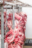 Butcher products. Processed pigs hanging in slaughter house Stock Images
