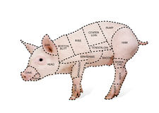 Butcher's pig chart. In front of a white background Stock Photo