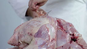 Butcher working on a big turkey. Professional butcher preparing fresh turkey meat for cooking dishes and freezing in refrigerator for later use. Wide shots and stock video