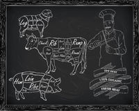 Butchering beef diagram, pork, lamb and cook Royalty Free Stock Images