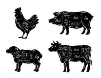 Butchers guide symbols Royalty Free Stock Image