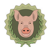 Butchery vector eco logo. Pig head in laurel Royalty Free Stock Images
