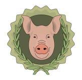 Butchery vector eco logo. Pig head in laurel. Eco butchery organic food vector logo. Big pink pig head in laurel wreath. Color illustration  on  white Royalty Free Stock Images