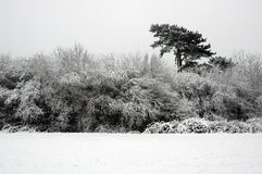 Bute park. Cardiff Bute park covered by snow, horizontally framed picture royalty free stock photo