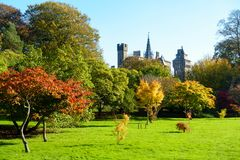 Bute Park and Cardiff Castle in Autumn. Bute Park with sunlit trees in vibrant autumn colours and Cardiff Castle in the background Stock Photo