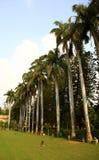 butelek drzewka palmowe Obrazy Royalty Free