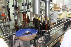 Buteljera den kubansk rom destillerade vinkällaren Arkivbild