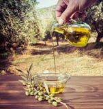 Buteljera hällande extra jungfrulig olivolja för cretanen i en bunke på trätabellen på ett olivträdfält royaltyfria foton