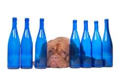 butelka błękitny pies zdjęcia royalty free
