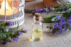 Butelka hizopu istotny olej z świeżym kwitnącym hizopem fotografia royalty free