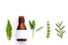 Butelka istotny olej z zielarskim świętym basilu liściem, rozmaryn, oreg Zdjęcie Royalty Free