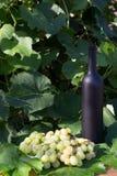 Butelka wino stojaki na tle zieleni liście winnica blisko wiązki winogrona, ocet naturalny napój, obrazy stock