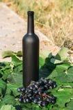 Butelka wino stojaki na tle zieleni liście winnica blisko wiązki winogrona, ocet naturalny napój, obraz stock