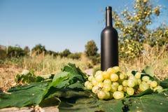 Butelka wino stojaki na tle zieleni liście winnica blisko wiązki winogrona, ocet naturalny napój, zdjęcie royalty free