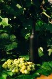 Butelka wino stojaki przeciw zielonym liściom winnica ocet naturalny napój, intymni winnicy naturalny napój, intymny zdjęcia stock