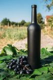Butelka wino stojaki przeciw zielonym li?ciom winnica ocet naturalny nap?j, intymni winnicy naturalny nap?j, intymny obrazy stock
