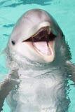 butelki delfinu nos Zdjęcia Royalty Free