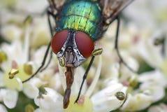 Butelki komarnica Obraz Stock