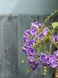 Butelki muśnięcia kwiat Zdjęcie Stock