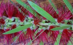 Butelki muśnięcia kwiat Makro- Zdjęcie Stock