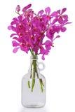 butelkuje storczykowe purpury Obraz Royalty Free