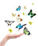 buterflies έκδοση χεριών Στοκ Εικόνες
