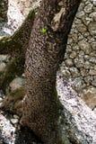Buterflies till ön av Rhodes Royaltyfria Foton