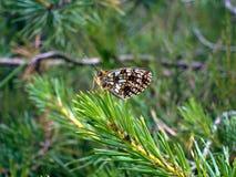 buterfly夏天在平静和平衡 免版税库存照片