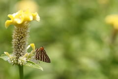 Buterfly Foto de archivo